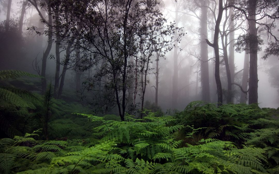 Foggy forest - Android, iPhone, Desktop HD Backgrounds / Wallpapers (1080p, 4k) (459120) - Nature / Landscapes