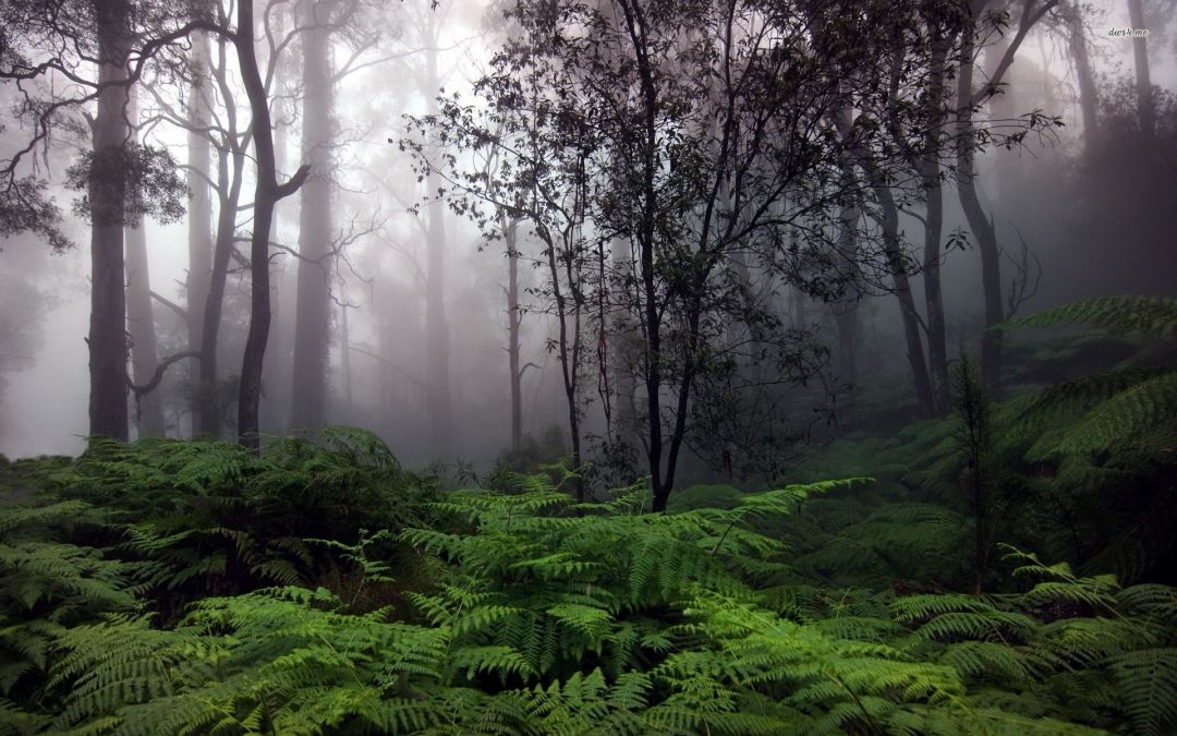 Foggy forest - Android, iPhone, Desktop HD Backgrounds / Wallpapers (1080p, 4k) (459095) - Nature / Landscapes