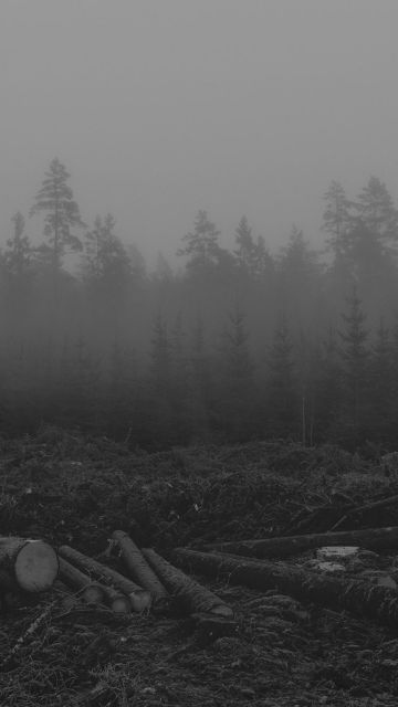 Foggy forest - Android, iPhone, Desktop HD Backgrounds / Wallpapers (1080p, 4k)