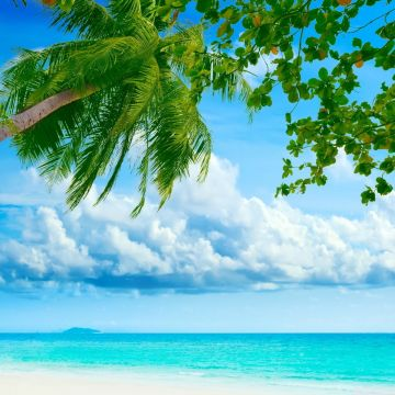 Tropical Beach Landscape - Android, iPhone, Desktop HD Backgrounds / Wallpapers (1080p, 4k)